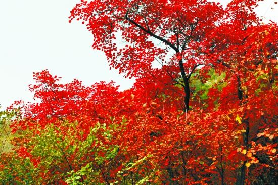 神农山风景名胜区位于焦作下辖