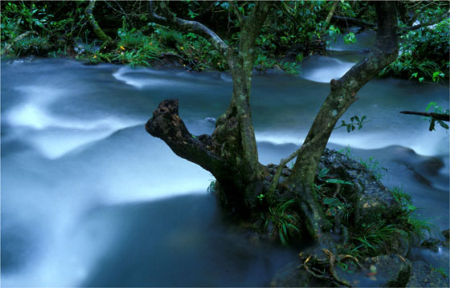 森林生物物种园