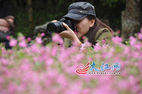 网媒记者花径赏四月桃花 大赞庐山风景独好