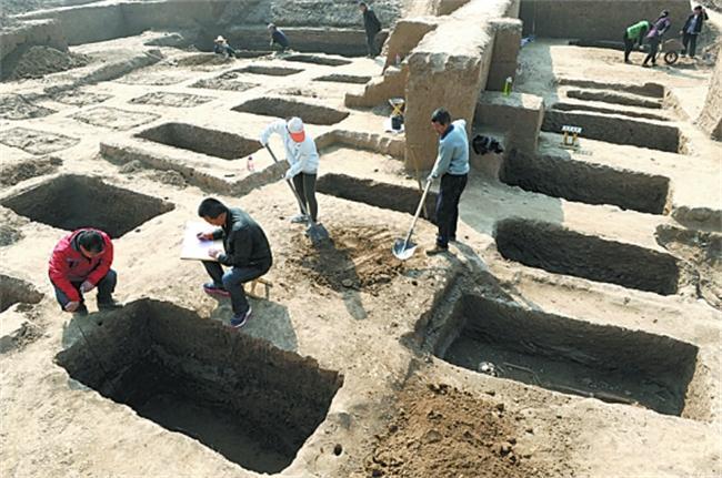 今年2月底,焦作市文物考古研究所开始对位于焦作新区阳庙镇聂村东北大沙河湿地发现的一处商周时期古遗址进行抢救性发掘,发现灰坑12个、灰沟2条、炉灶1个、墓葬37座。目前,已对其中22座墓葬进行了发掘,出土戈、锛等青铜器4件,贝币8枚,贝壳饰品2件,玉器1件,鬲、簋等陶器11件。在已发掘的墓葬中,其中5座墓葬中有陪葬品。在所有墓葬中均发现有殉葬狗,最多的一座墓葬里有3只殉葬狗。 在已发掘的墓葬中,规格最高的为19号墓,该墓中出土的陪葬品包括銎内戈、曲内戈、锛头等青铜器各1件,三足陶鬲1件,殉葬狗3只。该墓葬具